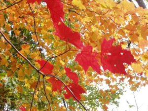yellow and red leaves on an autumn day