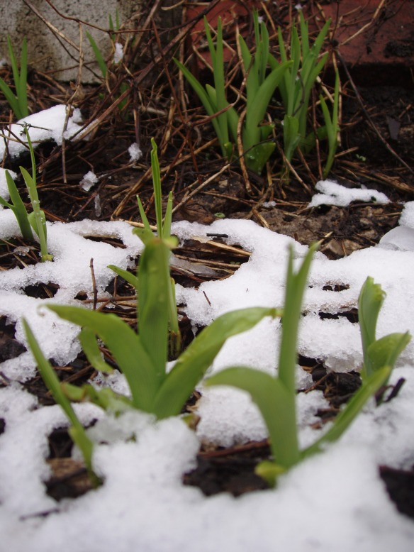 1st day of spring, March 20, 2010