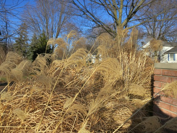 brown grasses waving in the wind