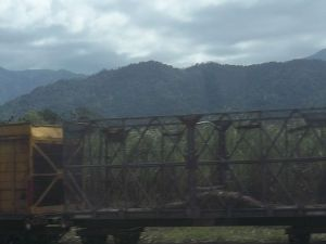 Sugar cane is huge industry here. The companies built a railway just to transport the sugar cane--the gauge is too small for passenger or other freight trains. You'll see tiny little tracks all over Queensland, made to carry sugar cane trains.
