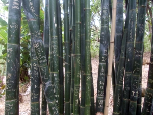 Graffiti on the bamboo!