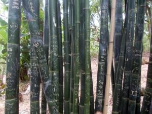 Graffiti on the bamboo!