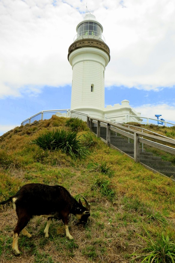 The goat and the lighthouse--sounds like a work of literary fiction