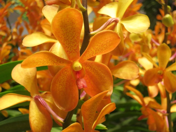 airport orchid