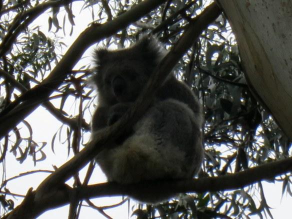 Koala yoga