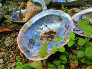 Paua shells are commonly found on the Otago coast--pretty, aren't they?