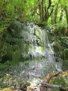This patch of moss normally just drips, but with the heavy rains the night before, it was a mini waterfall itself.