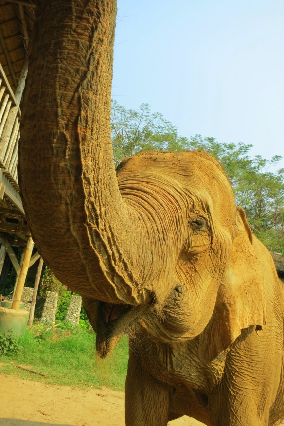Welcome to the Elephant Nature Park