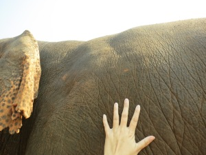 enp my hand, dwarfed by elephant