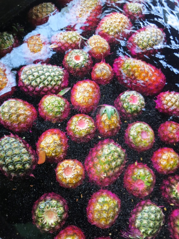 Purple fruited trough