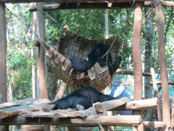 Naptime for bears