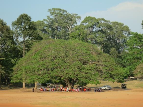 The snacks tree