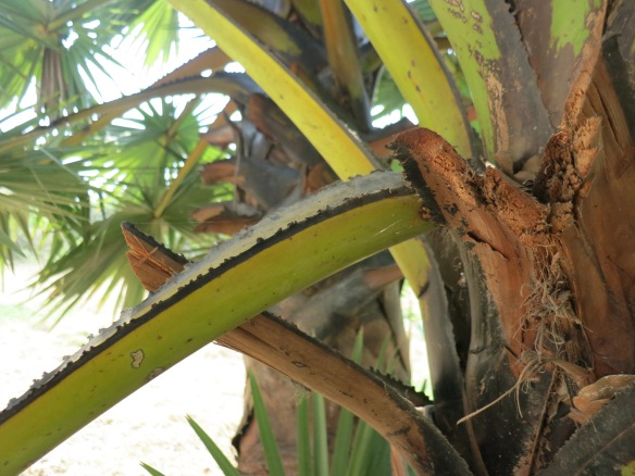 Sometimes the guards even used the sharp edges of palm fronds to cut throats