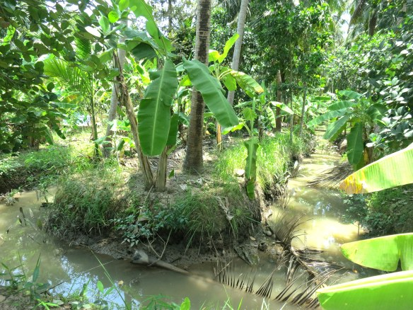 The canals of the Mekong Delta