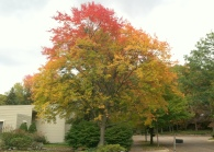 michigan autumn
