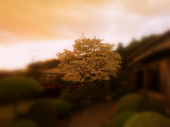 Blossoms in the garden