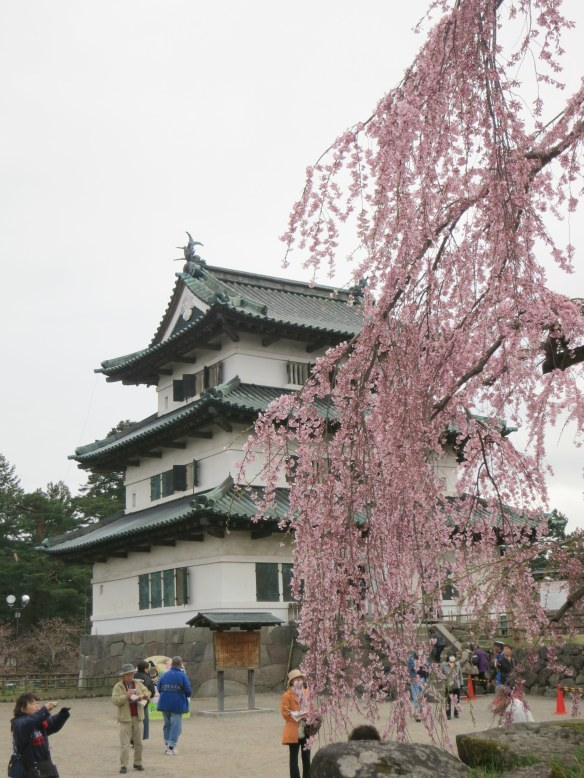 This weeping cherry tree, in front of the inner guard tower, is over 100 years old