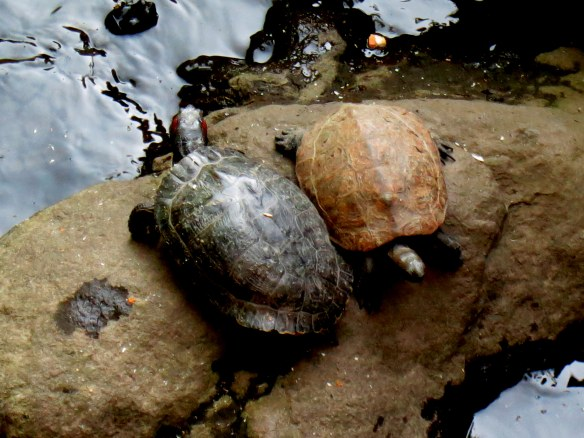 Turtles laying out