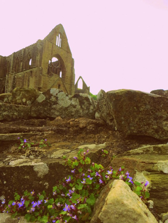 Nature creeping up on the abbey
