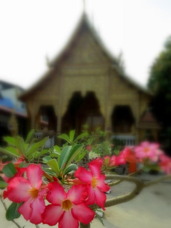 Chiang Mai, Thailand; February 18, 2013