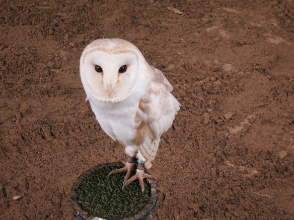 Hedwig of Harry Potter, is that you?