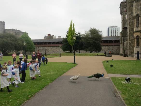 The peacocks were surprisingly undisturbed by masses of costumed children chasing after them