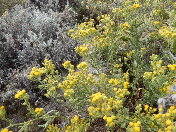 There were a lot of pretty yellow, red, silvery, and red flowers along the canyon