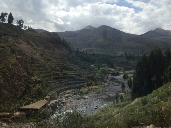 Terraced farming in the Colca Canyon