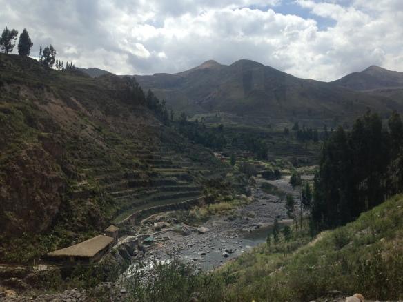 Terraced farming in the Colca Canyon