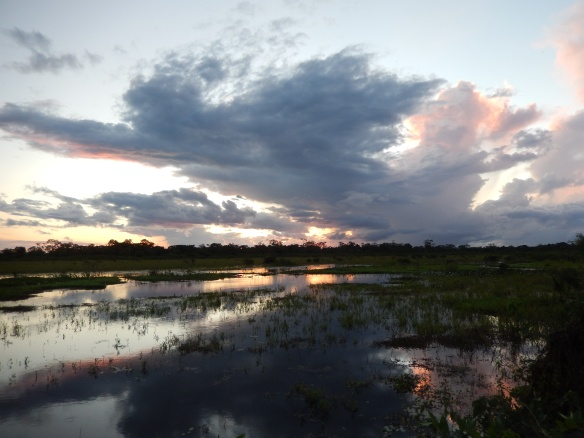 Sunset, the pampas of the Bolivian Amazon