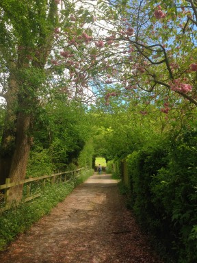 Lovely lanes leading out from the village