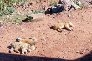 Sunbathing puppies